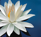 mindfulness courses Amsterdam